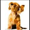 Dog Card 1 - CD