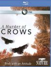 Nature: A Murder Of Crows [blu-ray] 18881409
