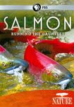 Nature: Salmon - Running The Gauntlet (dvd) 19110934