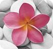 Handstands - Deluxe Pink Petals Mouse Pad - Pink
