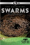 Nature: The Gathering Of Swarms [dvd] [2014] 25031542