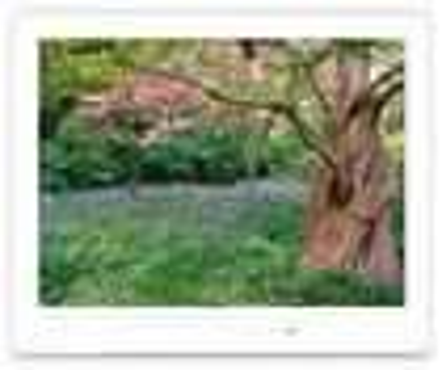 "ViewSonic - 8"" LCD Digital Photo Frame"