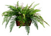 PlanterTech - Ledge Box Bluetooth Music System - Fern