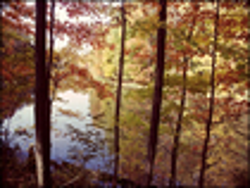 Trademark Art - A Secret Pond by Kurt Shaffer - Yellow/Orange