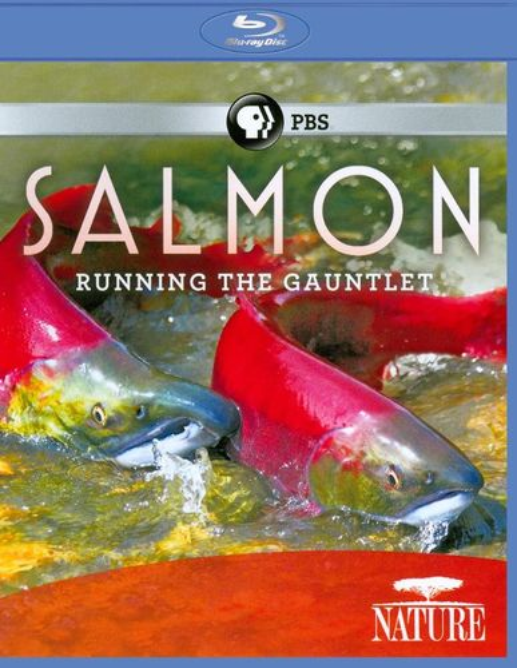 Nature: Salmon - Running the Gauntlet [Blu-ray] [2011] 19109756