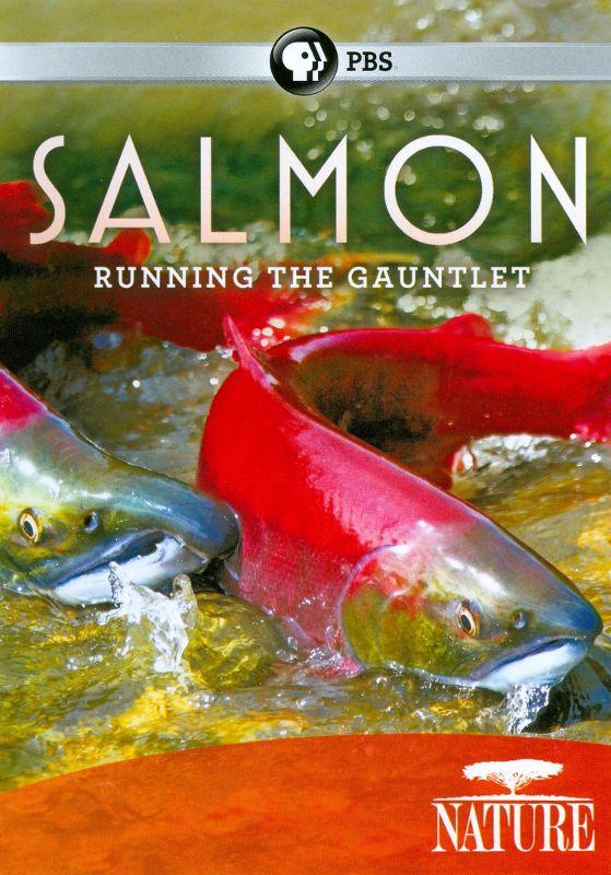 Nature: Salmon - Running the Gauntlet [DVD] [2011] 19110934